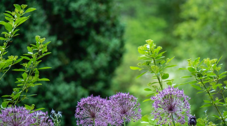 Do you have the best garden in Cranleigh?